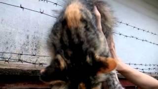 в помощь коту