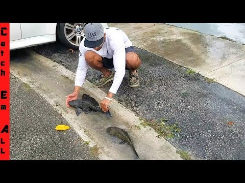 FISH SWIMMING On SIDE-WALK!