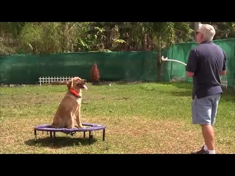 SECRET dog training technique that only top professionals use......