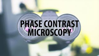Phase contrast microscopy for the assessment of ram sperm