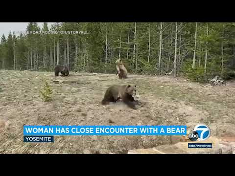 Bear charges towards woman at Yellowstone National Park | ABC7