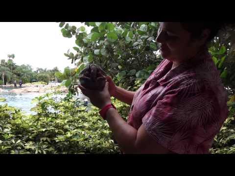 Discovery Cove Animal Encounters, Orlando