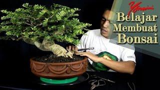 Bonsai Kawista #01 - Pemangkasan