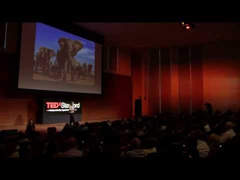 The Secret Lives of Elephants: Caitlin O'Connell-Rodwell at TEDxStanford