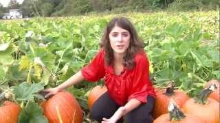 Pumpkin Picking 101