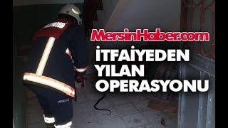 Mersin Haber - Mersin Erdemli'de Büyükşehir İtfaiye Ekiplerinden Yılan Operasyonu