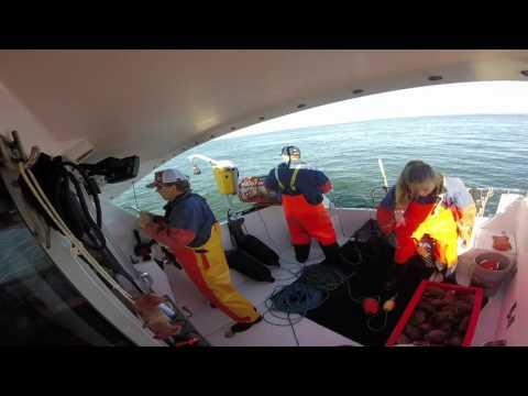 Björköbåt fiskar Hummer