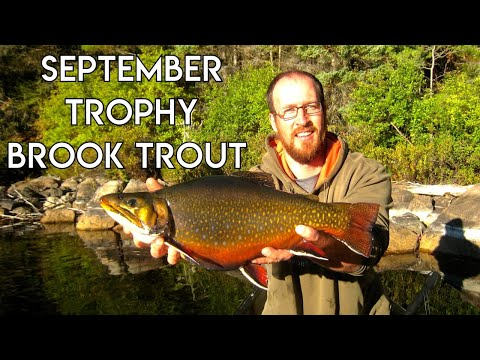 September Trophy Brook Trout | Blue Fox Camp