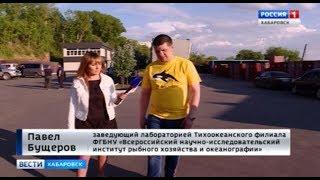 Косаток грузят в Хабаровске