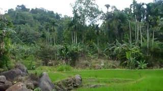 Sri Lanka,ශ්රී ලංකා,Ceylon,Beautiful Valley with Rice Paddy (01)