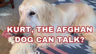 Talking Dog Pure Bred Afghan Hound! Curt say Hi!