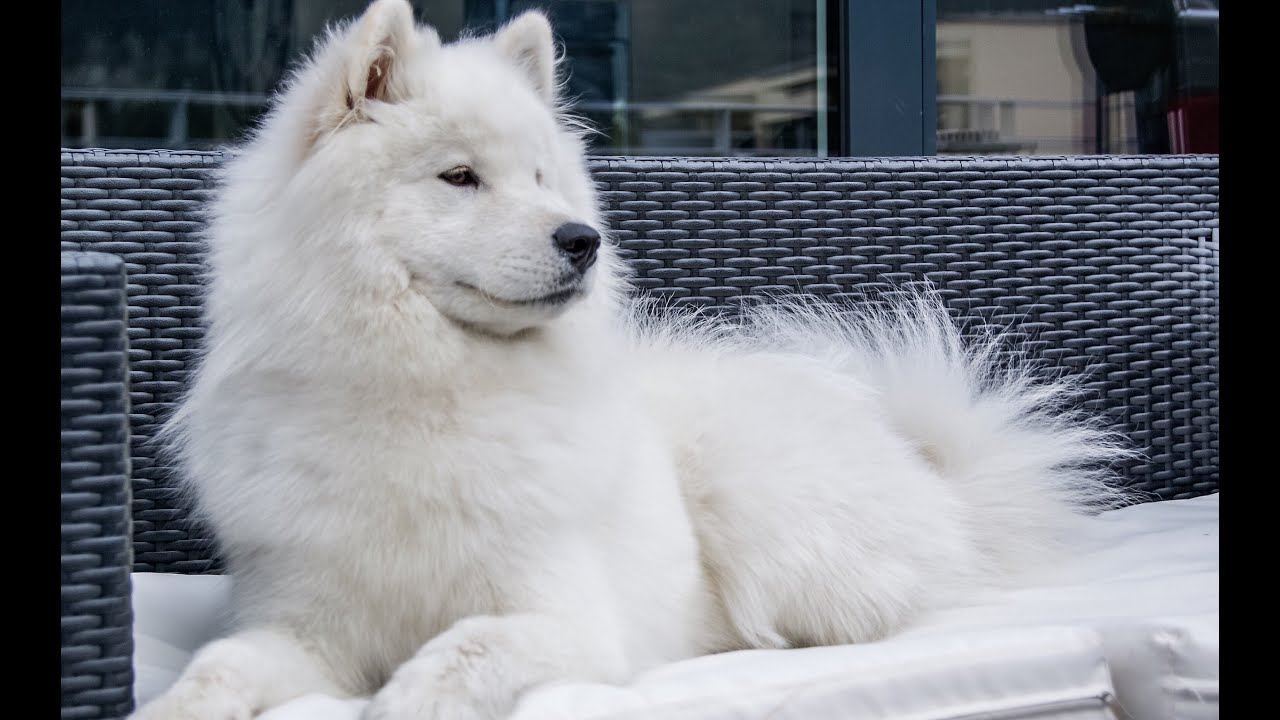 Pictures Of Cute Dog Breeds