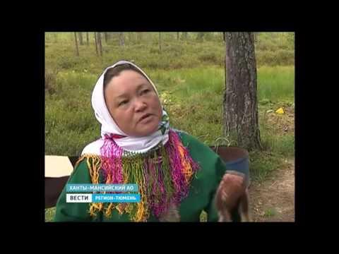 Пунси выращивают медовую клубнику в Нефтеюганском районе