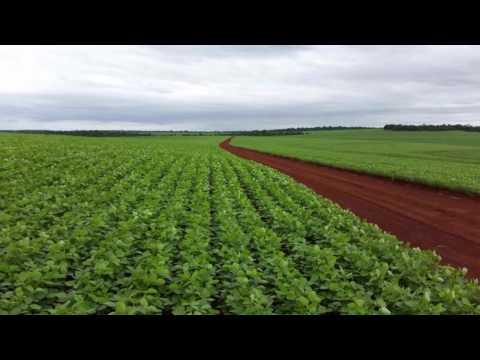 investir dans 65.000 tonnes de Soja au Paraguay