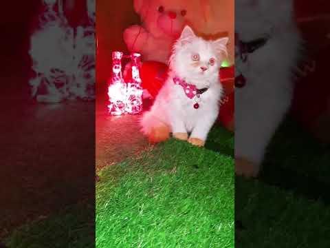 CAT VIDEOS || CUTE CATS || PET CATS |