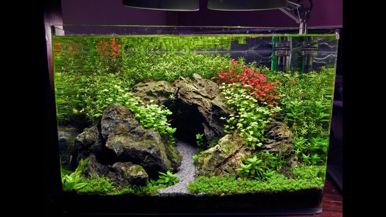 15 gal planted tank the cave youtube for Plante aquarium