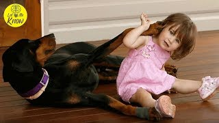 Dog Aggressively Grabs Baby, Then The Reason Why Becomes Clear