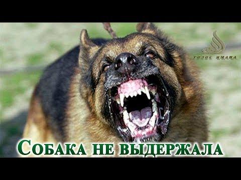 Собака не выдержала┇Даже