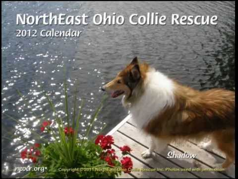 NorthEast Ohio Collie Rescue (NEOCR) 2012 Calendar Preview