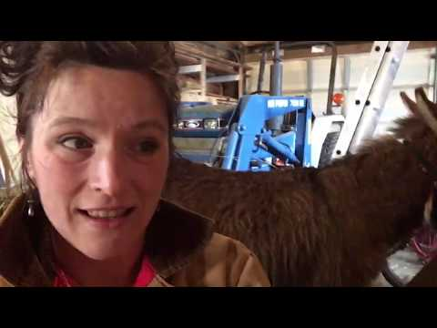 Can we MILK a DONKEY while treating her Hoof? | Front Porch Catholic