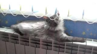 кот балдеет на батарее