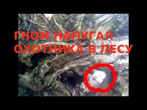 ГНОМ НАПУГАЛ ОХОТНИКА В ЛЕСУ странное существо снятое на камеру. мифическое существо