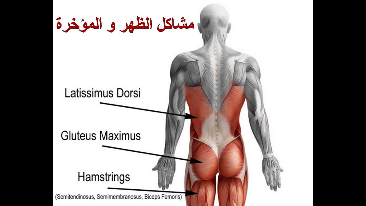 b8d6bd3573fe0  مشاكل الظهر و المؤخرة   العلاج الطبيعي والتمارين   يجب التأكد من الحالة  أولا!! - YouTube