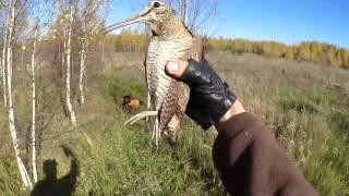 Охота на вальдшнепа осенью с дратхааром