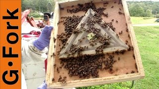 Honey Harvest w/ Bee Escape Beekeeping 101