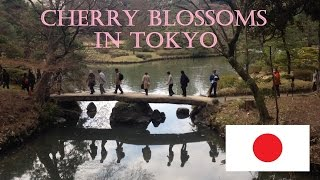 Cherry Blossoms in Tokyo - 3 Days to Canada