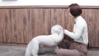 [강아지 훈련] 개인기훈련 - 빵! 가르치기
