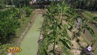 เกษตรสร้างชาติ : เลี้ยงปลาดุกเกษตรผสมผสาน