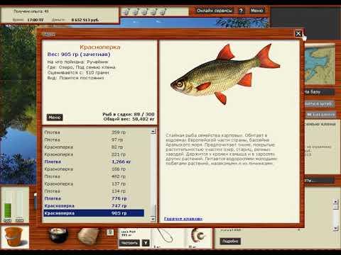 Хотите ловить только зачетную рыбу в русской рыбалке 3? Тогда вам сюда.