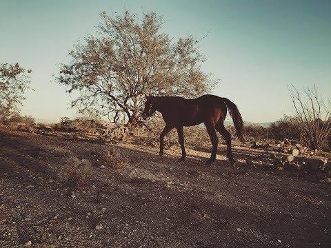 ✶✶ I got a horse!!! ✶✶