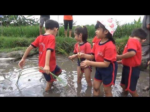 ketika-anak-tk-belajar-menanam-padi-di-kampung-horta-bogor
