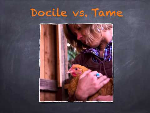 Urban Farm Store Chicken Keeping Class