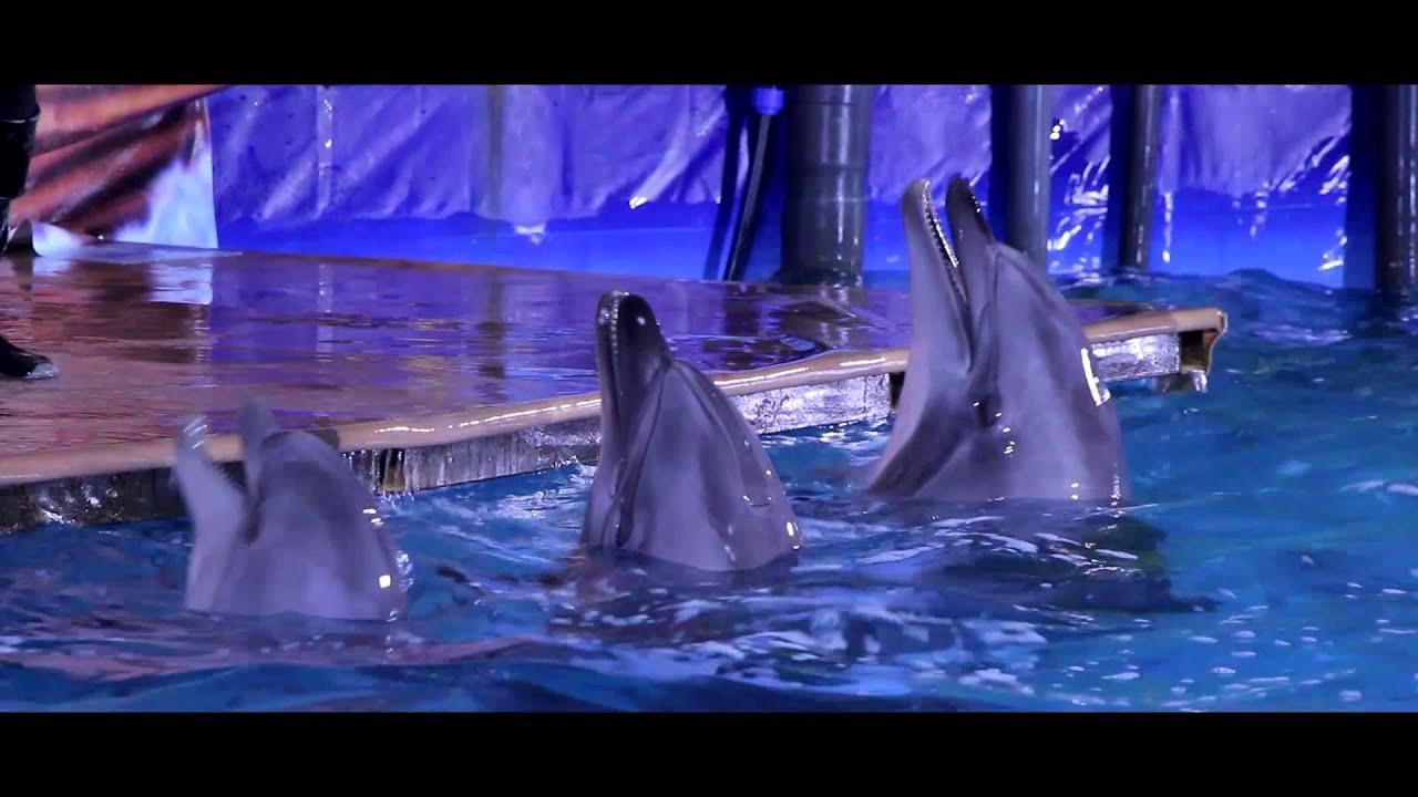 дельфинарий в иркутске на комсомоле обследования технического