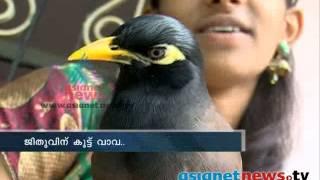 Mynah ,amazing bird that can imitate any sound ജീതുവിന് കൂട്ട് വാവ