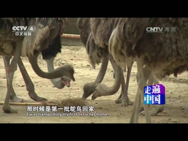20160725 走遍中国  5集系列片创业先锋(1) 打造鸵鸟王国