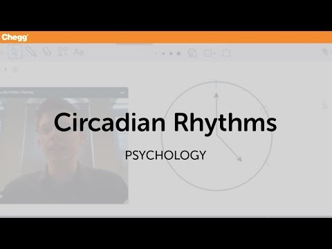 Circadian Rhythms | Psychology | Chegg Tutors