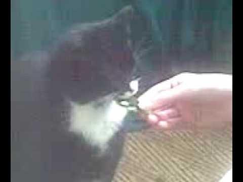 Lulu eat Cannabis