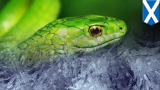 뱀을 얼려죽이면, 엄청난 고통에 시달린다는데, 동물학대방지협회라는 자들이...