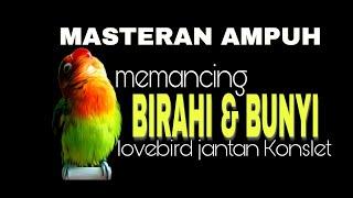 Download lagu MASTERAN ! Memancing BIRAHI & BUNYI lovebird !