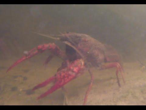 Making A Mini Crawfish Farm Prt 3 - Update