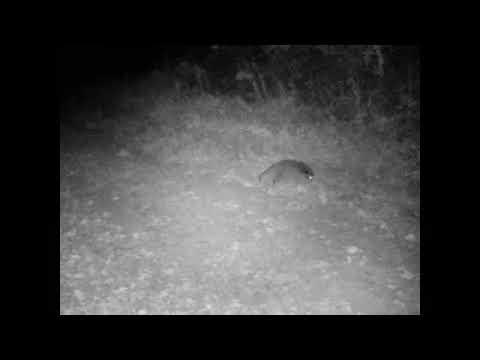 A trail camera captured videos of wildlife near Griffin Creek Elementary School near Medford d...