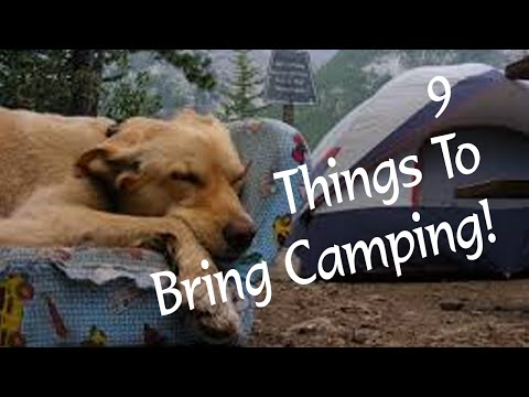 9 Things To Bring Camping For Your Dog | Diggity Dog