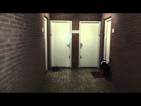 Pitbulls homecoming party