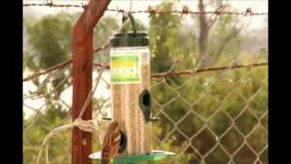 Bird Feeders By Amateur Club Foundation Created By Prashant Deore