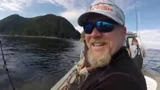 Sea Lion Attacks Halibut