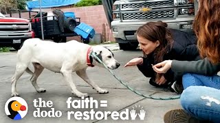Dog Who Was Scared Of Everything Gets More Playful Every Day | The Dodo Faith = Restored